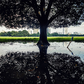 Happy Photography day by Sudarshan Das - City,  Street & Park  City Parks ( bird, water, reflection, park, tree, green )