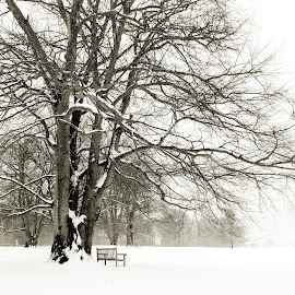 by Amy Powers Smith - Landscapes Weather ( black and white, snow, trees, blizzard, landscapes,  )