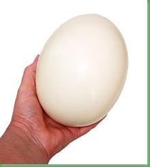 ostrich_egg_big