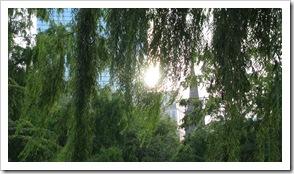 Boston Common Sun Reflection Through Trees