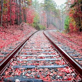 Rockfish Railroad by Lou Plummer - Transportation Railway Tracks ( walking, autumn, color, fog, fall, leaves, rain, hiking,  )