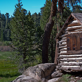 Little Cabin in the Woods by Dale Fillmore - Buildings & Architecture Decaying & Abandoned ( cabin, forest meadow, old building, decaying, historic )