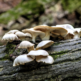 Mushrooms by Dave Martin - Nature Up Close Mushrooms & Fungi ( mushrooms )