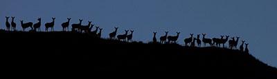 deer400.jpg