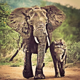 Mom & I by Pieter J de Villiers - Digital Art Animals ( animals, elephant, digital art, baby, mom )