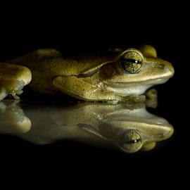 Frog by Indranil Bhattacharjee - Animals Amphibians ( canon, ignitedimages, nature, frog, camera, amphibians, photography, indranil,  )
