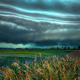 Days of Thunder by Phil Koch - Landscapes Prairies, Meadows & Fields ( vertical, photograph, farmland, yellow, storm, leaves, love, storm chaser, sky, tree, nature, autumn, weather, storms, flower, orange, twilight, agriculture, horizon, portrait, environment, dawn, season, serene, trees, floral, inspirational, natural light, wisconsin, ray, landscape, phil koch, sun, photography, farm, horizons, severe, inspired, clouds, office, extreme, park, green, scenic, morning, shadows, wild flowers, field, red, fog, blue, sunset, peace, fall, meadow, summer, beam, earth, sunrise, landscapes, mist )