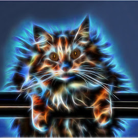 Electrique cat by Marleen la Grange - Abstract Patterns