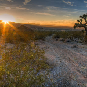 Evening in the Desert by Bud Walley - Landscapes Deserts ( desert )