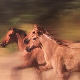 by Bong Perez - Animals Horses