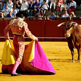 Seville Bull Fighting by Julie Josey - Sports & Fitness Other Sports ( bullfighting, seville, matador, bull, spain,  )