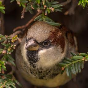 on vous regarde by Serge Thonon - Animals Birds ( weckparis2014,  )