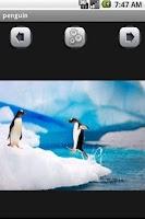 Screenshot of penguin Wallpaper