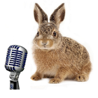 Mr Rabbit Voice Recorder HD icon