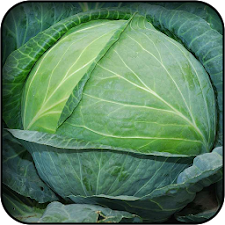 Cabbage wallpapers