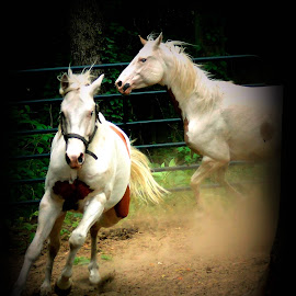 Power play by Susan Palmer - Novices Only Pets ( nature, horses, pet, horse, animal )