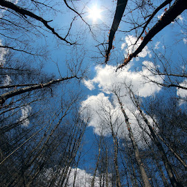 Sky is the limit by Cristi Rus - Nature Up Close Trees & Bushes ( clouds, blue sky, sky, autumn, trees )