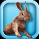 Bunny Simulator 1.0.2