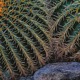 SQUEEMISH by Albert Lipsey - Nature Up Close Other plants