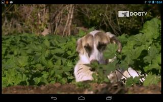 Screenshot of DOGTV Anywhere