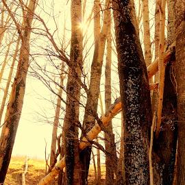 by Banie du Randt - Nature Up Close Trees & Bushes