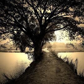 Way to my village.. by Kamelia Dandapat - Landscapes Travel ( sepia, west bengal, village road, village, tree, waterbody, mudroad, india, landscape, pond )