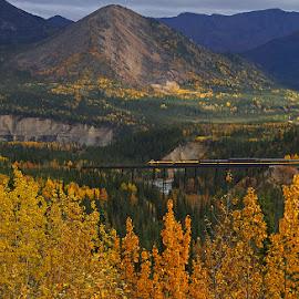 Fall In Denali by Frank Keller - Transportation Trains ( denali, railroad, fall, alaska, trains, color, colorful, nature )