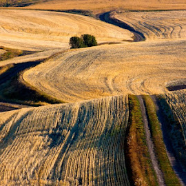 The gold and black patterns of the Palouse in September. by Gale Perry - Landscapes Prairies, Meadows & Fields