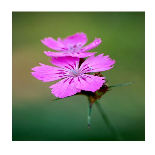 住粉紅色的背景,系列2 LOGO-APP點子