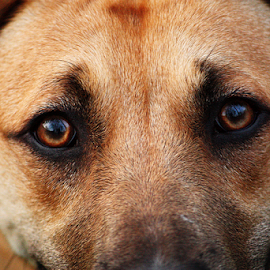 Cooper by Damian Karich - Animals - Dogs Portraits ( eyes, beauty,  )