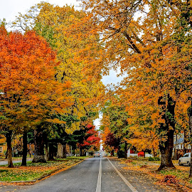 Autumn Artistry by Barbara Brock - City,  Street & Park  Neighborhoods ( small town america, autumn leaves, fall colors, orange leaves )