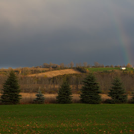 Rainbow by Steve Randall - Landscapes Prairies, Meadows & Fields ( meadow, farmland, trees, rainbow, rain )
