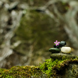 Stones by Ovidiu Marinoiu - Nature Up Close Rock & Stone ( water, waterfall, stone, pink, stones, flower )