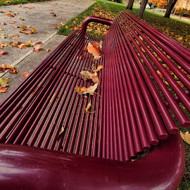 by Dipali S - Artistic Objects Furniture ( park, bench, autumn, leaves )