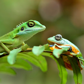meeting by Ais Setiawan - Animals Amphibians (  )