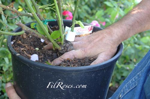 cvecara beograd