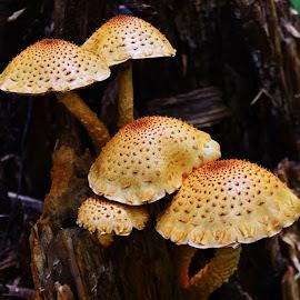 Tan Mushrooms by Thomas Barr - Nature Up Close Mushrooms & Fungi