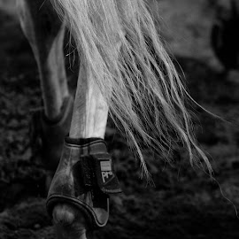 Horse Sense 03 by Norie Dani - Sports & Fitness Other Sports ( equine, horses, horse sense, norie dani, equestrian )