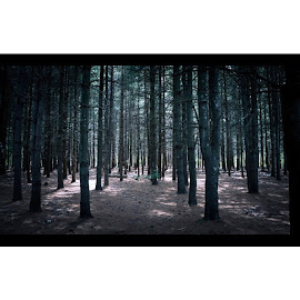 by Jancel Cardenas - Landscapes Forests ( boston, usa, lightroom, cinematic, shoot2kill, cinematic, bostonusa )