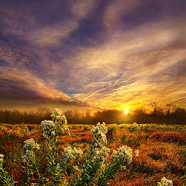 Letting Go by Phil Koch - Landscapes Prairies, Meadows & Fields ( vertical, photograph, fine art, travel, yellow, leaves, love, sky, nature, autumn, flowers, light, flower, orange, colors, agriculture, horizon, rural, portrait, environment, dawn, serene, outdoors, trees, floral, inspirational, natural light, wisconsin, ray, landscape, phil koch, sun, photography, blue sky, horizons, inspired, clouds, office, park, green, back light, scenic, morning, shadows, field, red, color, sunset, peace, fall, meadow, landscapephotography, beam, earth, sunrise, landscapes, mist,  )
