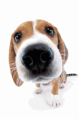 cute dog sniffs live wallpaperlive wallpaper下載及Cute Dog Live
