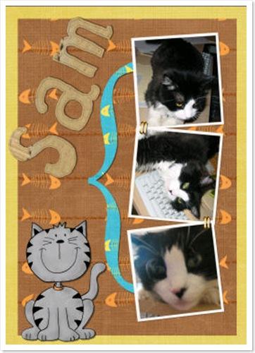 sam_cat_kat