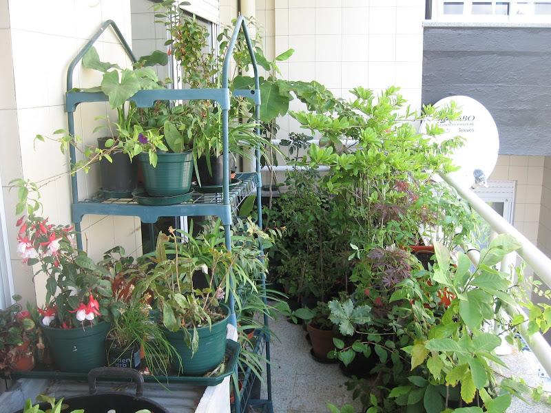 Mis balcones viveros IMG_2505