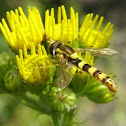 Hoverfly/syrphid or flower fly