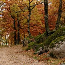 by Manuel Cértima - Landscapes Forests