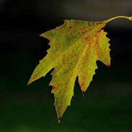 by Jasmina Blagojević - Nature Up Close Leaves & Grasses