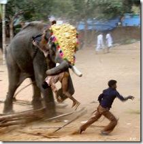 elephantAP1004_468x470