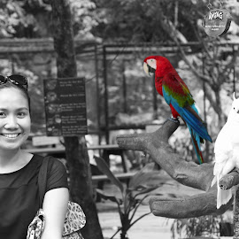 Parrot by Jhing Summers - City,  Street & Park  Amusement Parks ( selective color, pwc )