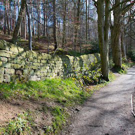 Swinsty Trail by Amy Murtha - Novices Only Landscapes ( yorkshire spring path )