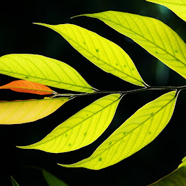 Green Leaves by Koh Chip Whye - Nature Up Close Leaves & Grasses (  )